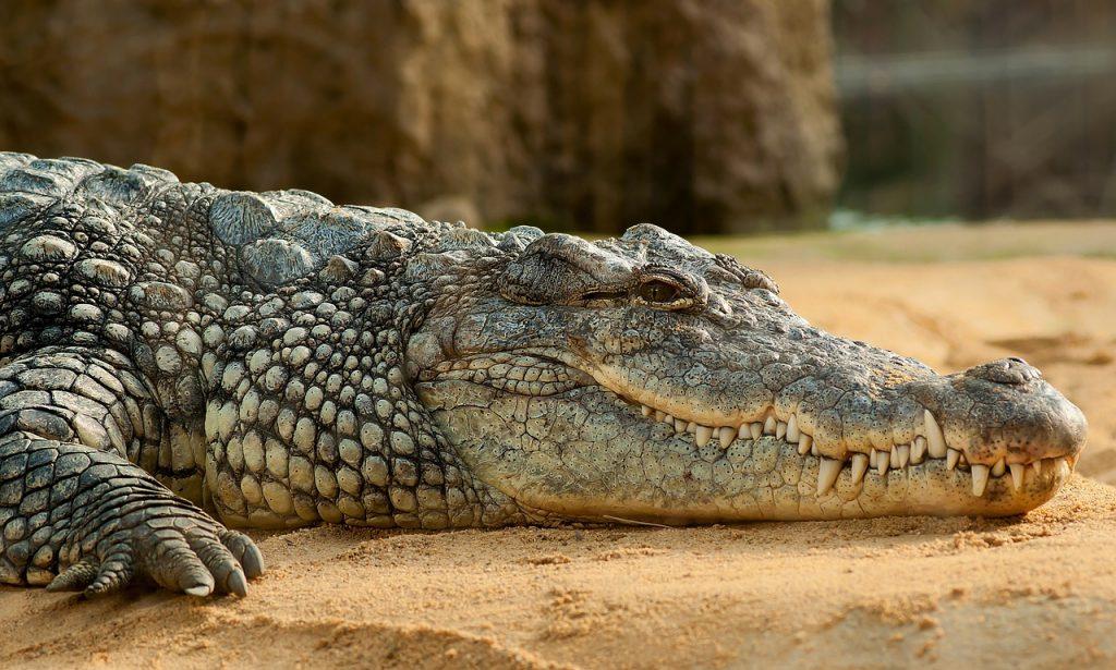 Camping La Poche : Ferme Crocodile